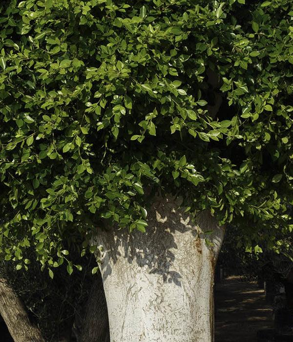 Mediterranean plants cover