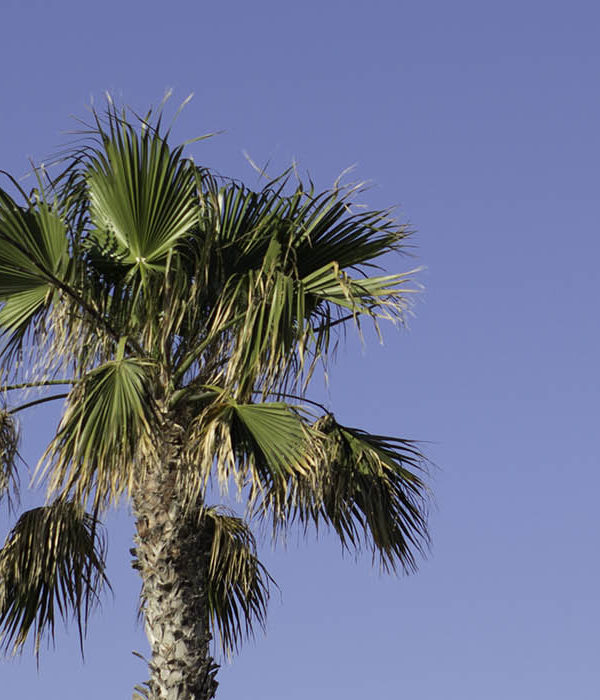Palm trees cover